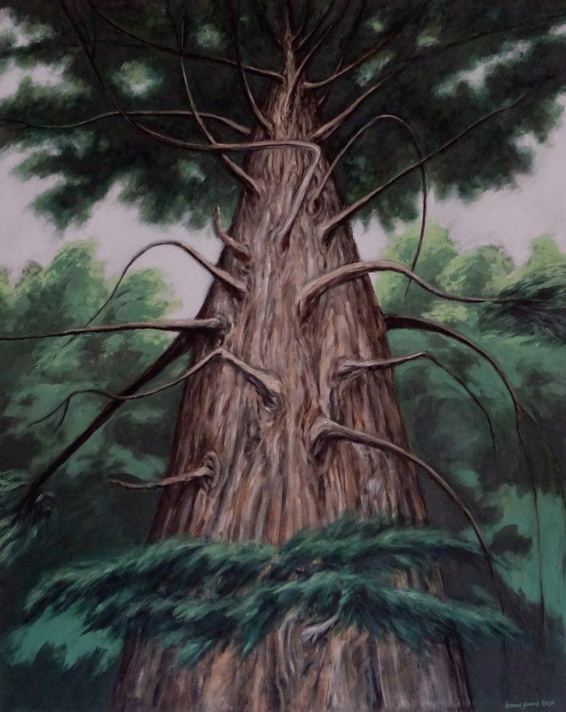 Looking up a great hemlock tree
