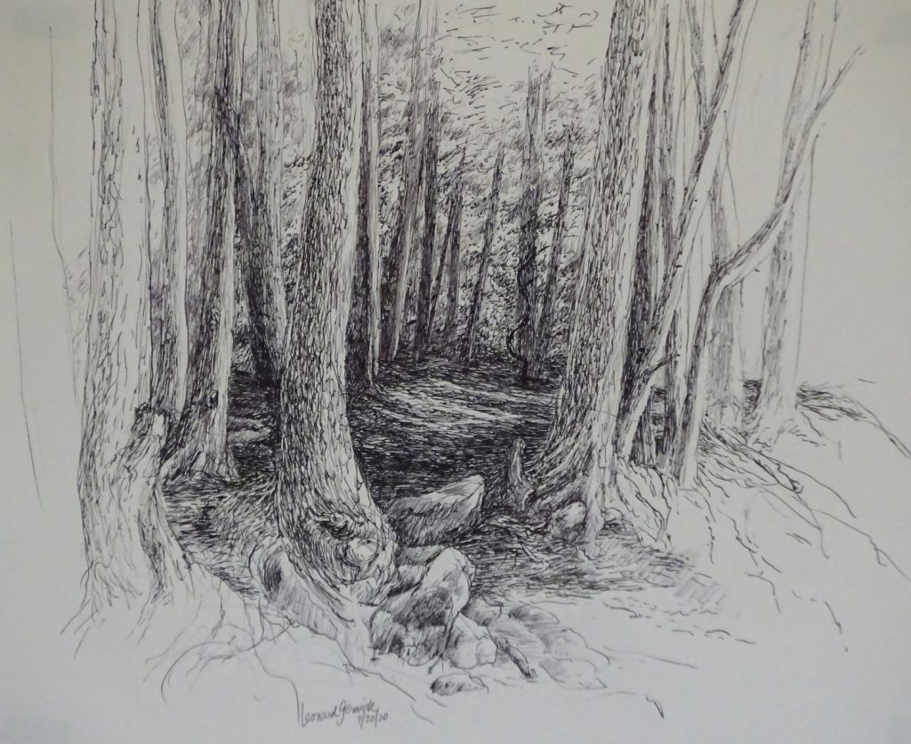 Drawing of a dense woods