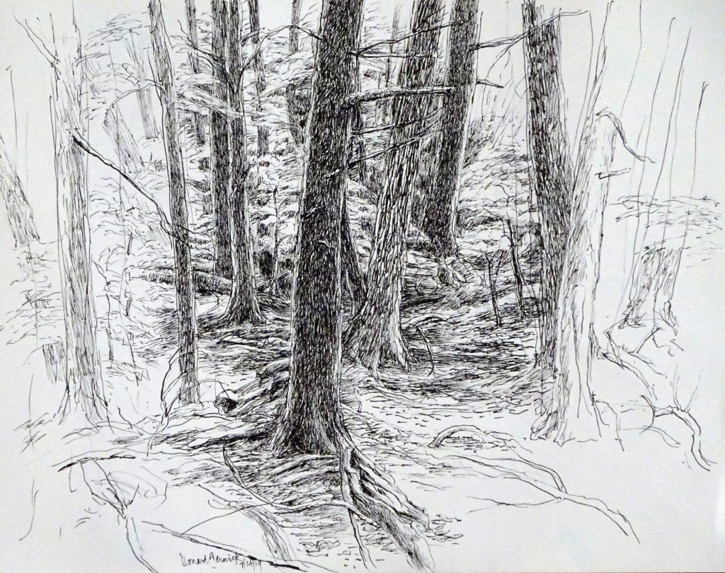 Drawing of hemlock trees in dense woods