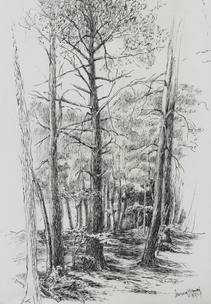 Drawing of hemlock trees on a wooded path